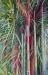 Cauchois - bambous - 76 x  53_01.JPG
