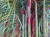 Cauchois - bambous - 76 x  53_01