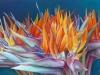 Cauchois - bouquetsdoiseauxdeparadis - 53 x 80_01