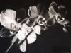Clerempuy - Orchidee en clair obscur - 60x80_01
