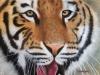 Martin Durand - Tigre V50 X H70_01