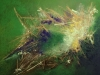 Renaud - nicheforestiere- V40xH50_01