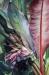 1 -Danielle Cauchois - La bananeraie (50 x 70 cm)_01.JPG