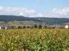 en automne dans les vignes de Gevrey-Chambertin 1.JPG