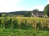en automne dans les vignes de Gevrey-Chambertin 2.JPG