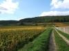 en automne dans les vignes de Gevrey-Chambertin 3.JPG