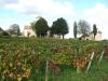 en automne dans les vignes de Gevrey-Chambertin 4.JPG