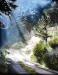 Bourdin -Promenade sous bois-80x60.jpg