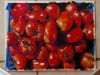 D5-EPS Thierry-tomates-43x35.jpg